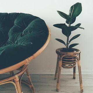 papasan sofa velevet gree